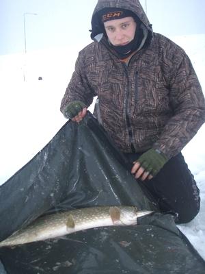 Kalan säilyvyys pakkasessa